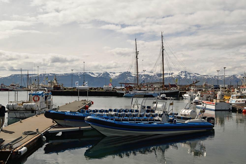 Oservation des baleines, Húsavík, Islande