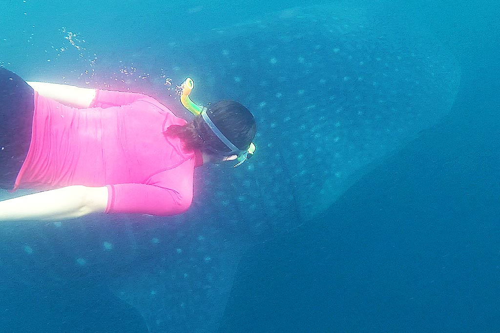 nager requin baleine