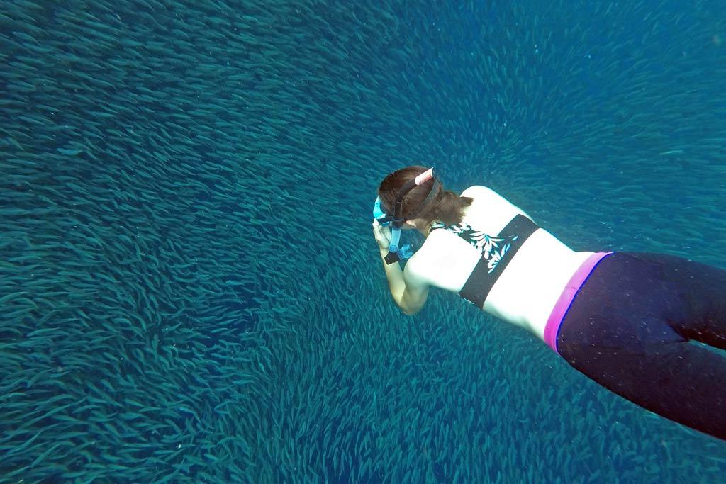 Snorkeling sardines