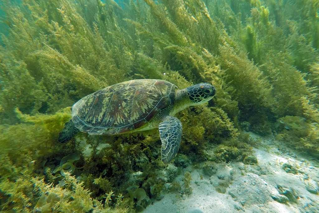 Moalboal tortue cebu