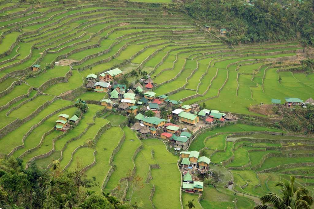 rizières terrasses batad
