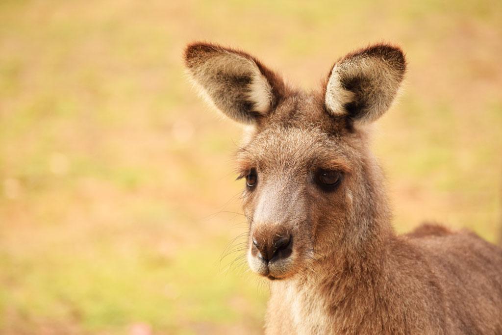 Australie itinéraire deux semaines