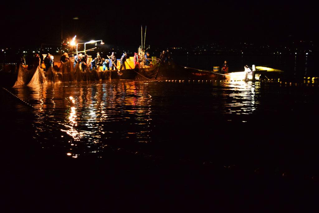 Calmars bioluminescents Toyama Japon