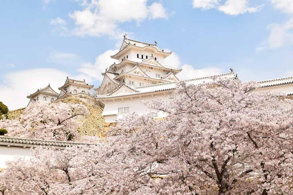 château de Himeji cerisiers