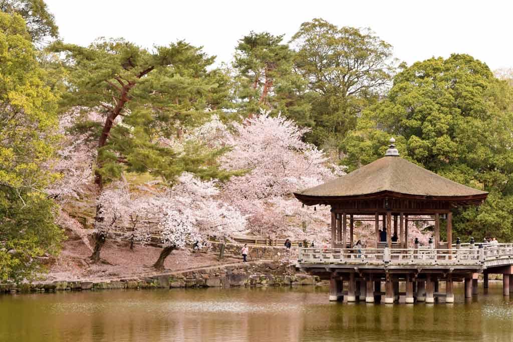Pavillon Ukimi-do Nara