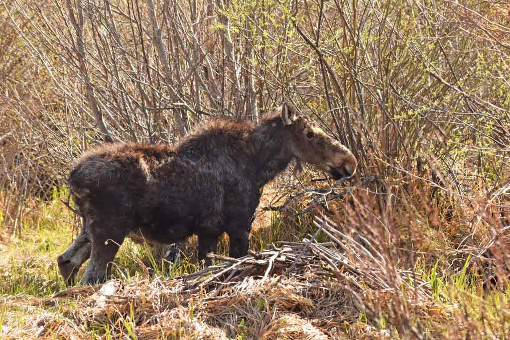 Elan Grand Teton National Park