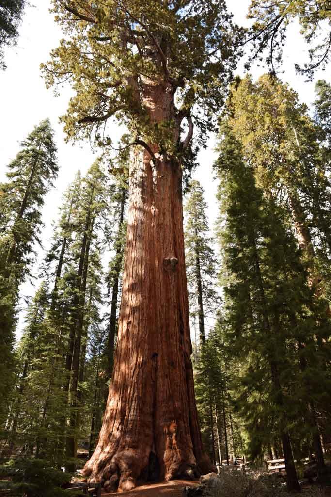 Visiter Sequoia National Park General Sherman
