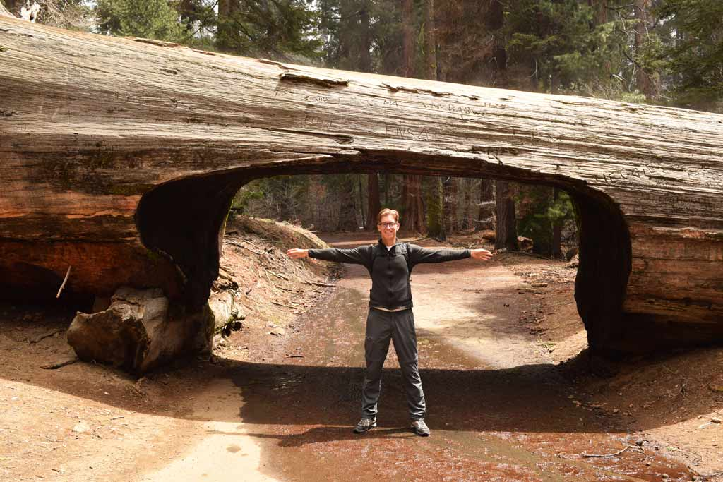 Visiter Sequoia National Park Tunnel Log