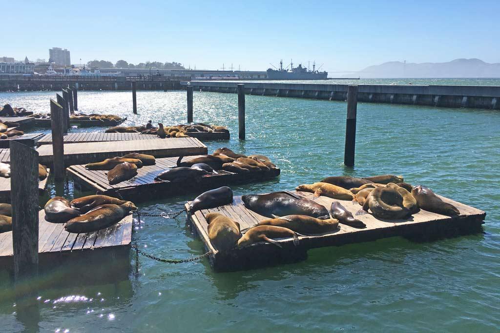 Lions de mer Pier 39